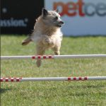 Dog Leaping lookig sideways