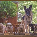 German Shep and family