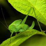 katydid babysend