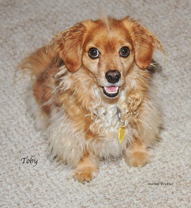 Dog Toby