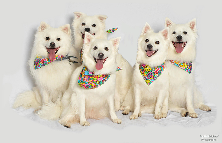 five happy dogs