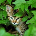 CAT BAby cat2