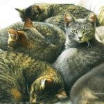 Cats fivesmall