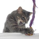 cat enragedsmall