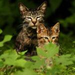 cat mom and orange axxxbaby